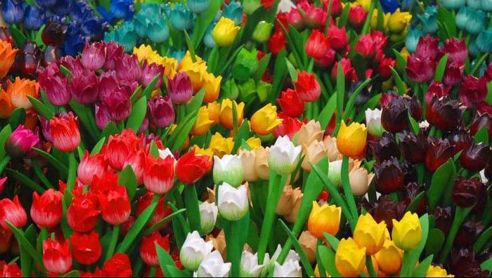 Тета-тюльпаны