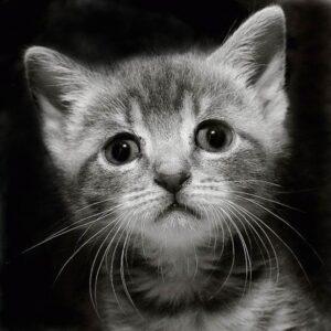 Котенок грустный